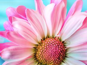 Fibromyalgia Remission Story, Lois from Ohio