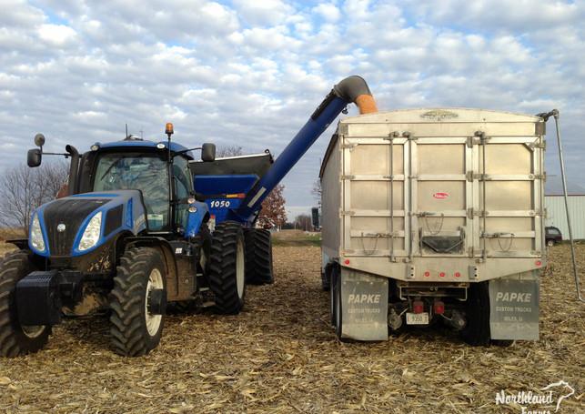 Loading grain truck.jpg