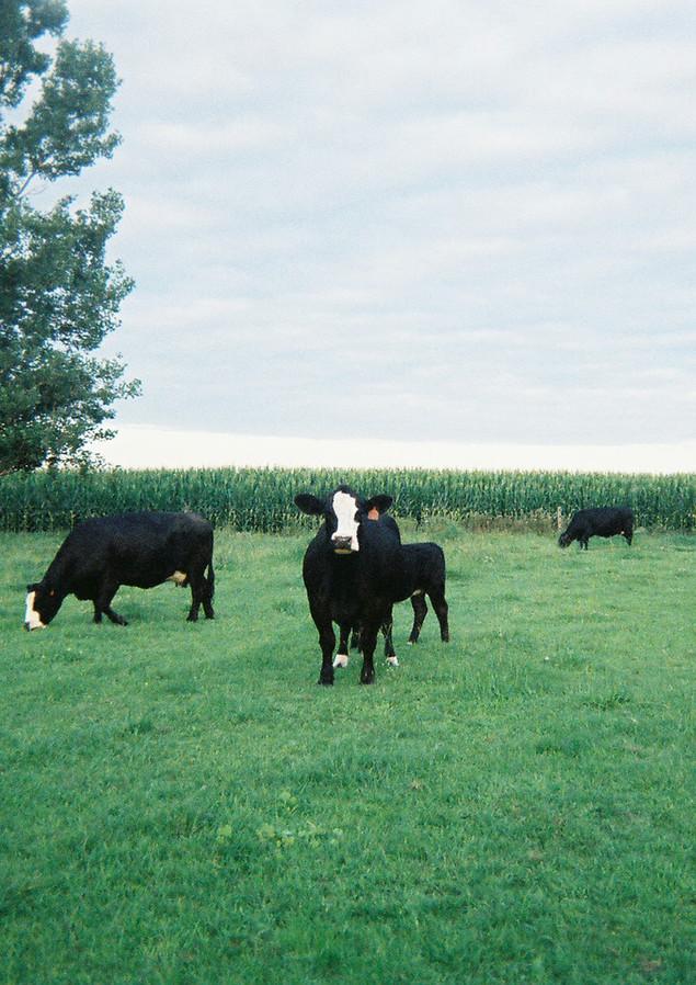 Baldy Pasture.jpg