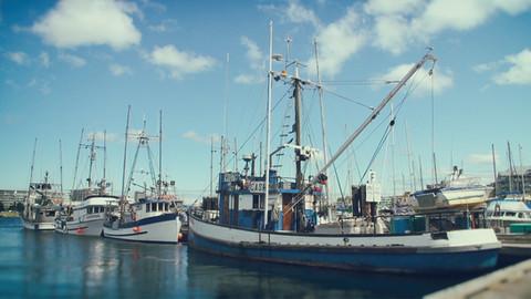 BeyondClimate_FishingIndustry.jpg