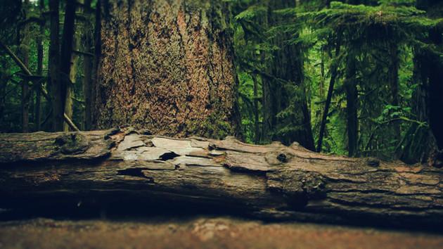 BeyondClimate_HaidaForest.jpg