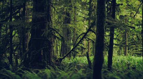 BeyondClimate_HaidaTrees.jpg