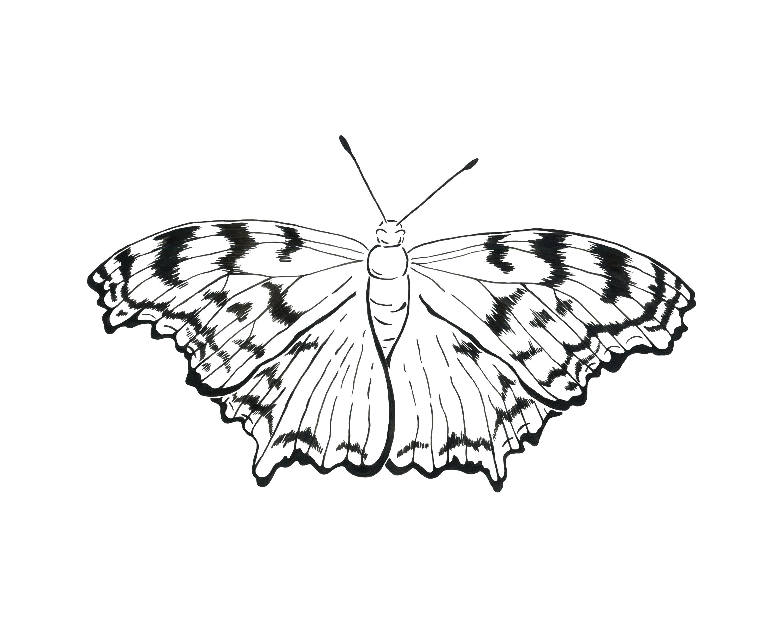 Tortoise Shell Moth