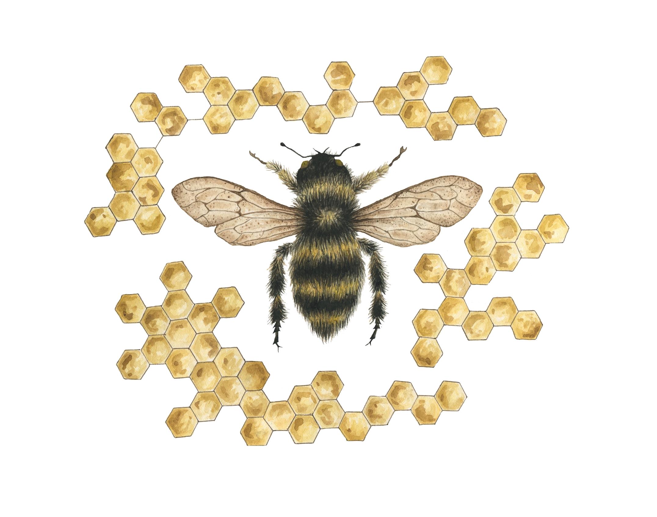 Honey Bee in Honey Comb