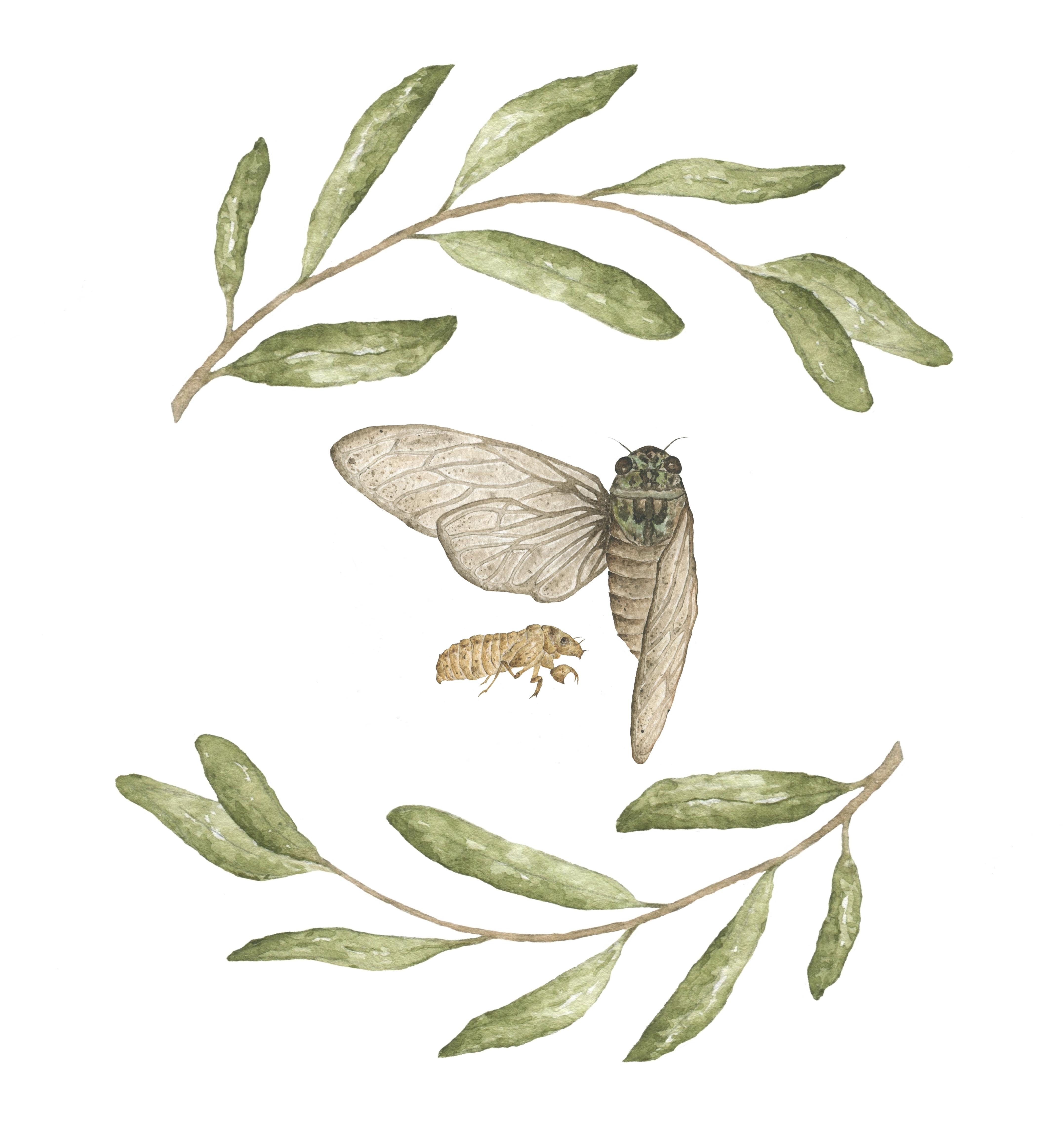 Cicada Wreath