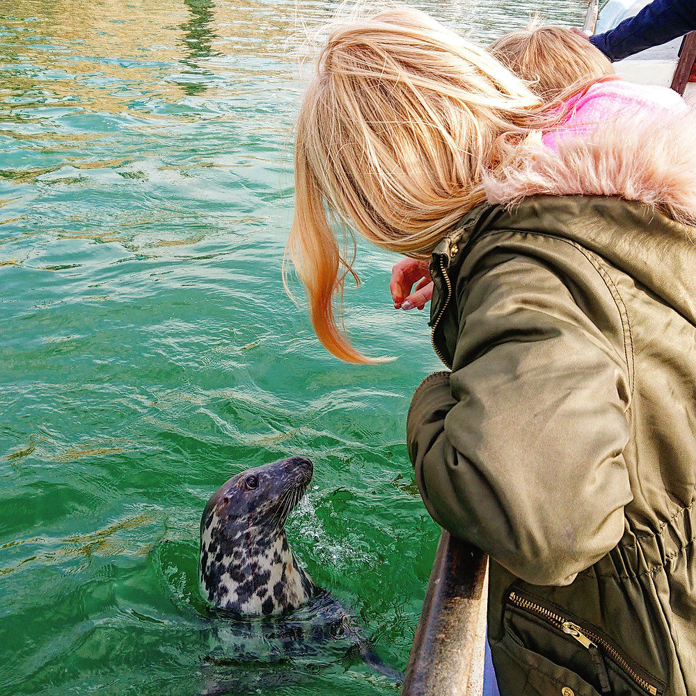 Newquay Smugglers Coastal Adventure and Boat Trip Wildlife Spotting