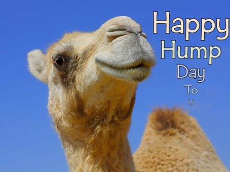 Happy Hump Day - This means we are half way through the week!