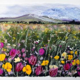 Spring Meadow Culloden