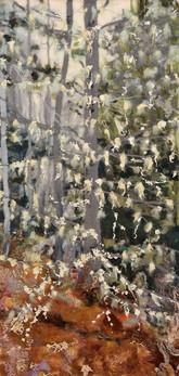 Forest Lichen