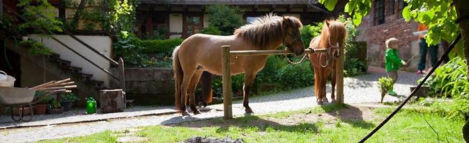 Pension-Pferdebrunnen-Hund-und-Pferde.jp