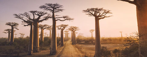 K1024_Baobabs_shutterstock_718975819.JPG
