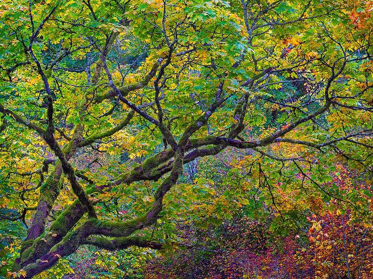 Autumn Mossy Oak