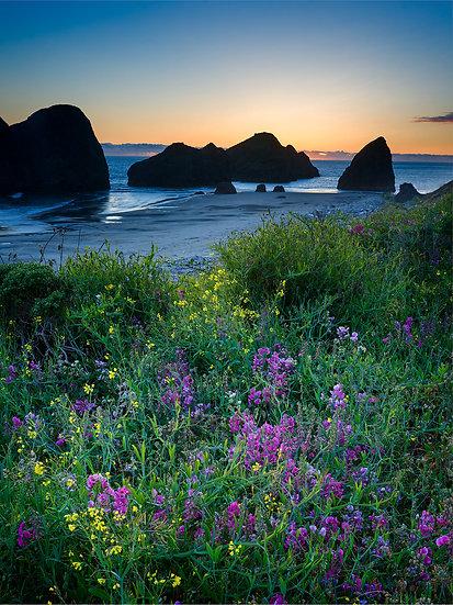 Gold Coast Sunset - vert