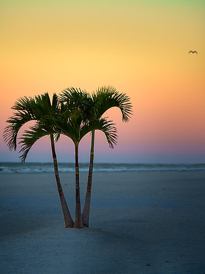 St Pete Seagull Sunset