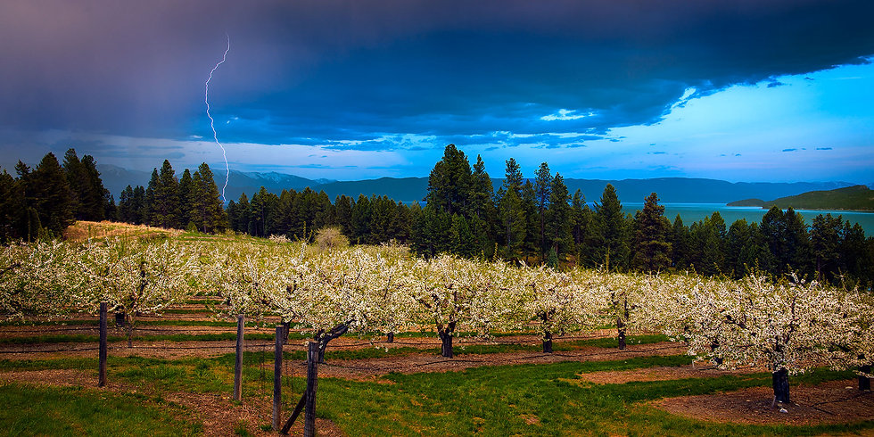Orchard Storm