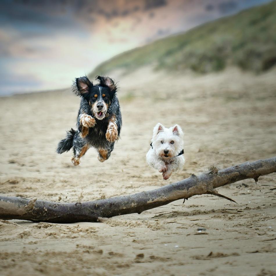 Bertie & Womble