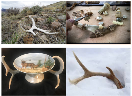 OCTOBER EXHIBIT:  What Might An Antler Become?