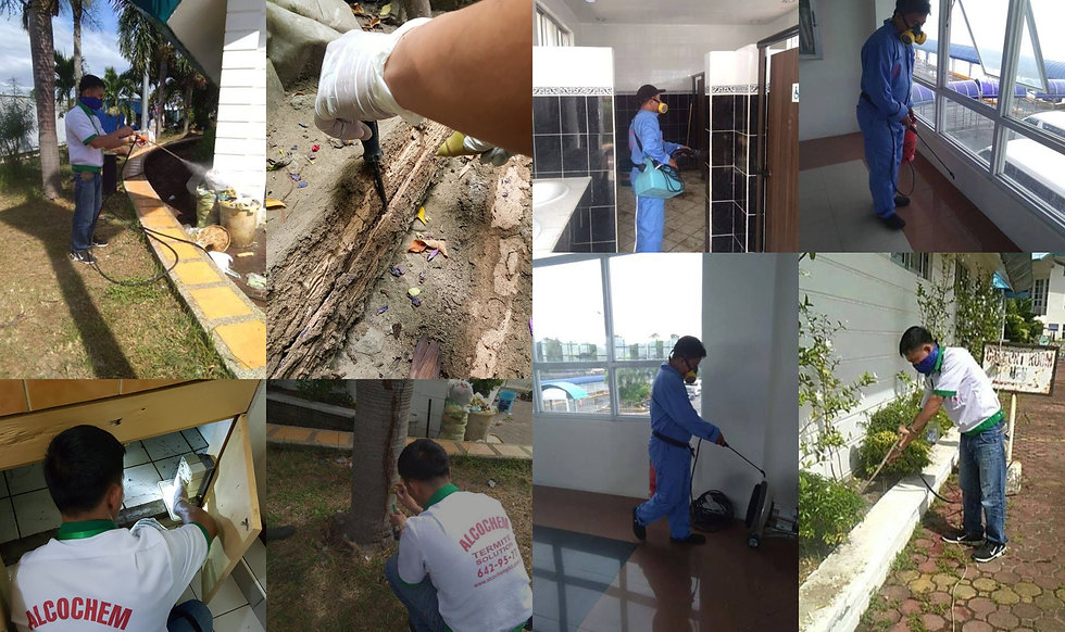 Pest Control Services in Cainta Rizal - Alcochem Pest Control Corporation