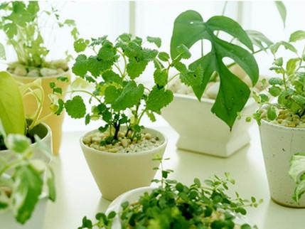 植物が枯れる?