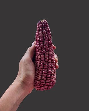 maíz criollo mexicano