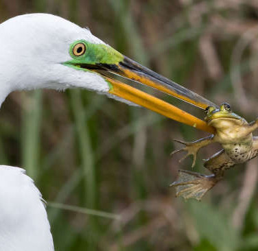 Audubon Photography Awards Release The Best Entries Of Birds Chowing Down And They're Hilarious