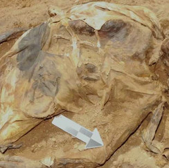 """Identity Of New York's 150-Year-Old Mummy """"The Woman In The Iron Coffin"""" Finally Revealed"""