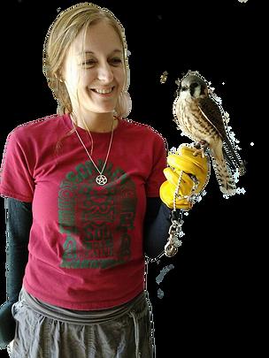 Museum volunteer holding a kestrel