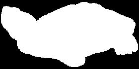 Red-Slider-Turtle-final.png