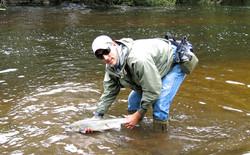 Remise à l'eau d'un saumon de l'Ellé
