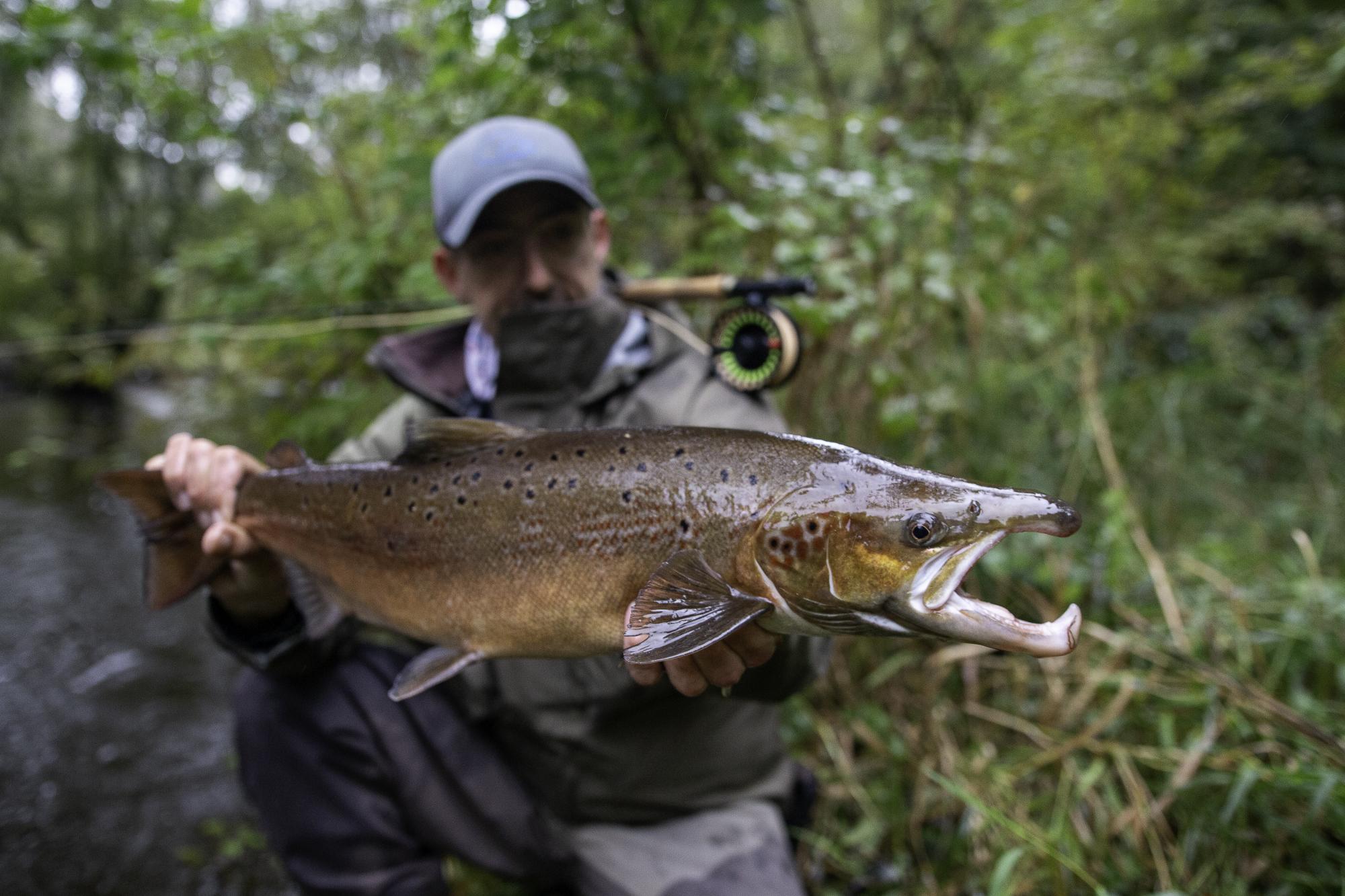Magnifique saumon mâle de fin de saison @pierrerigalleau