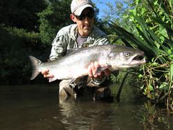 Magnifique saumon de l'Elorn