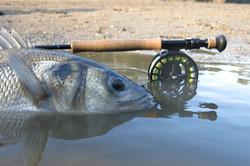 Pêche en No-Kill uniquement