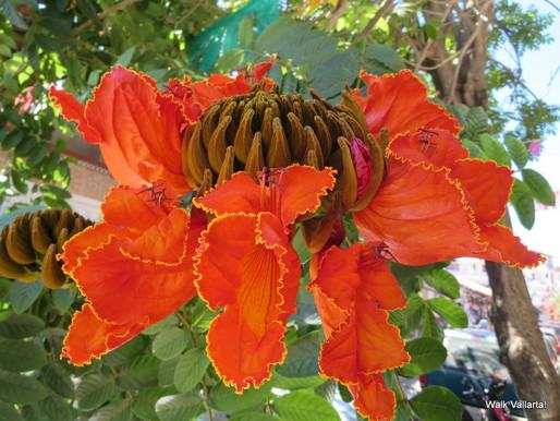 Tropical Plants of Vallarta