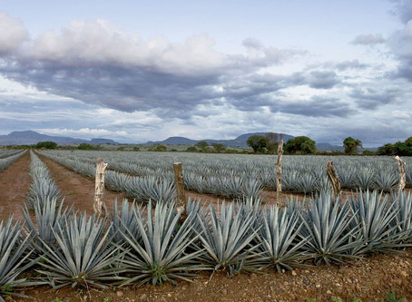Tequila! A UNESCO World Heritage Site.