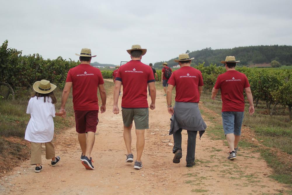 Walking to the vineyards at Quinta do Gradil vindima