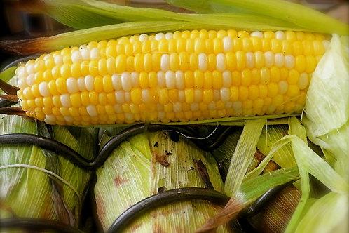 Corn 2 Colour - Sweet USA