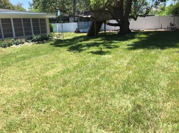 lawn backyard.png