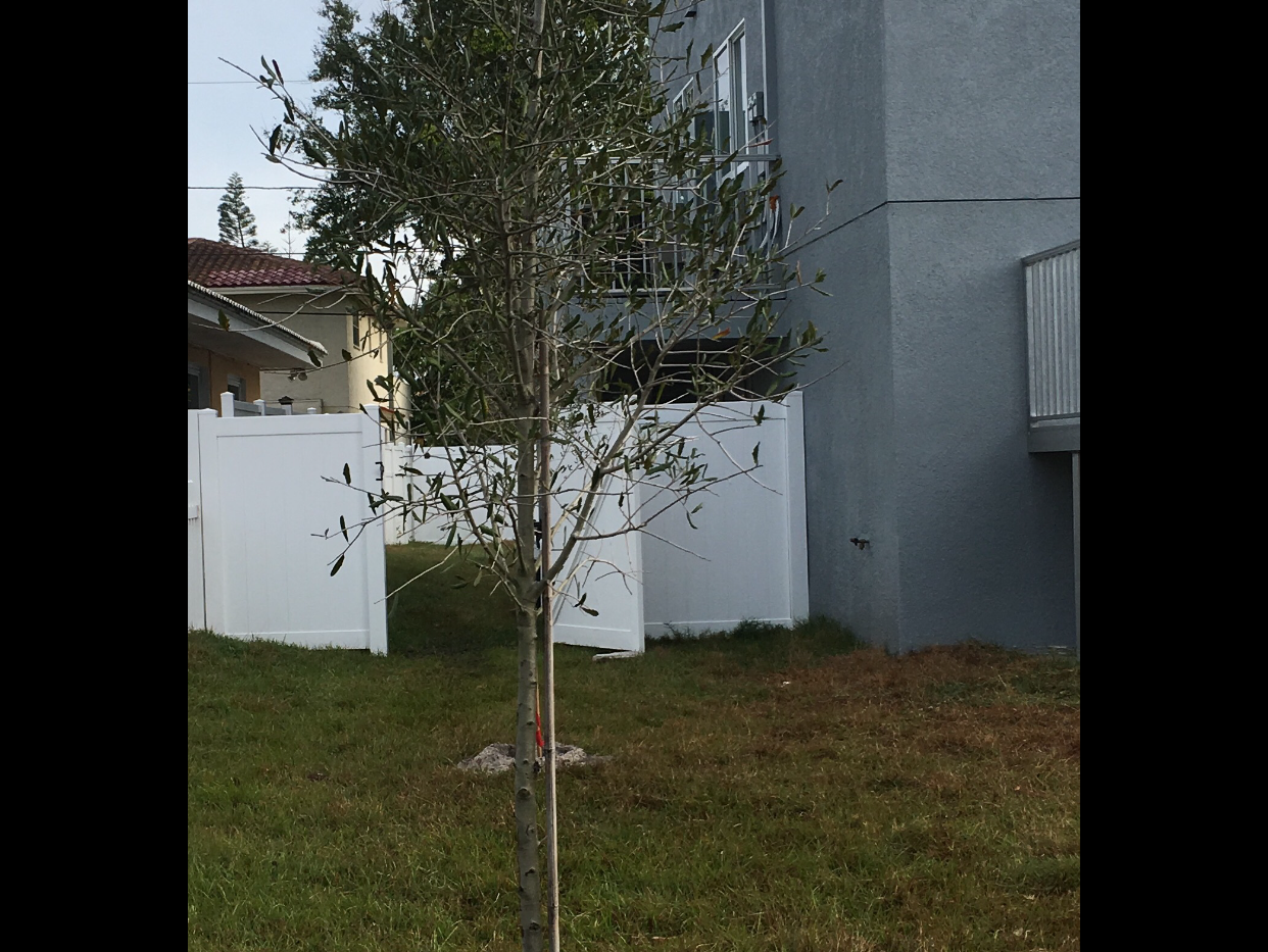 new tree.PNG