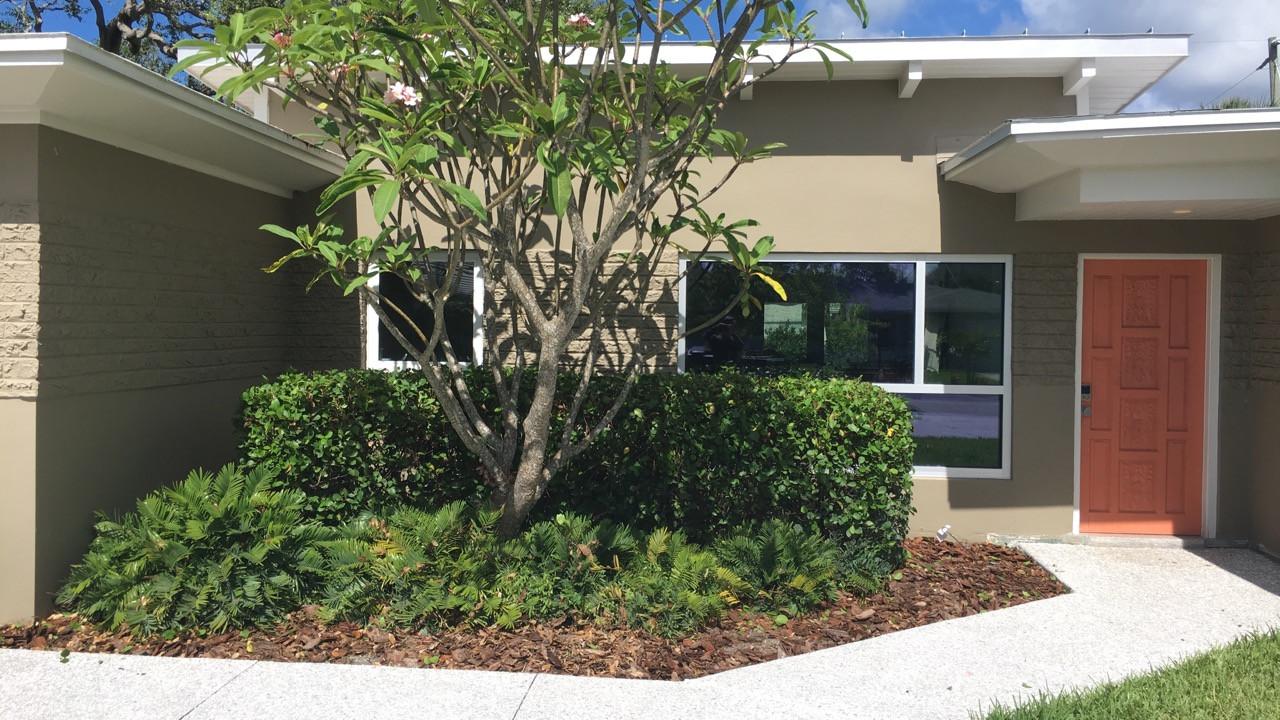bushes after.JPG