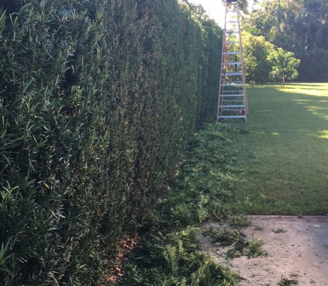 hedge trim after.JPG