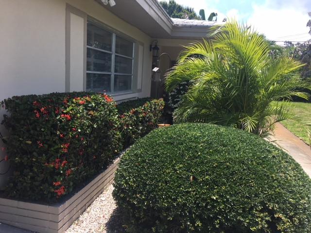 bushes.jpeg