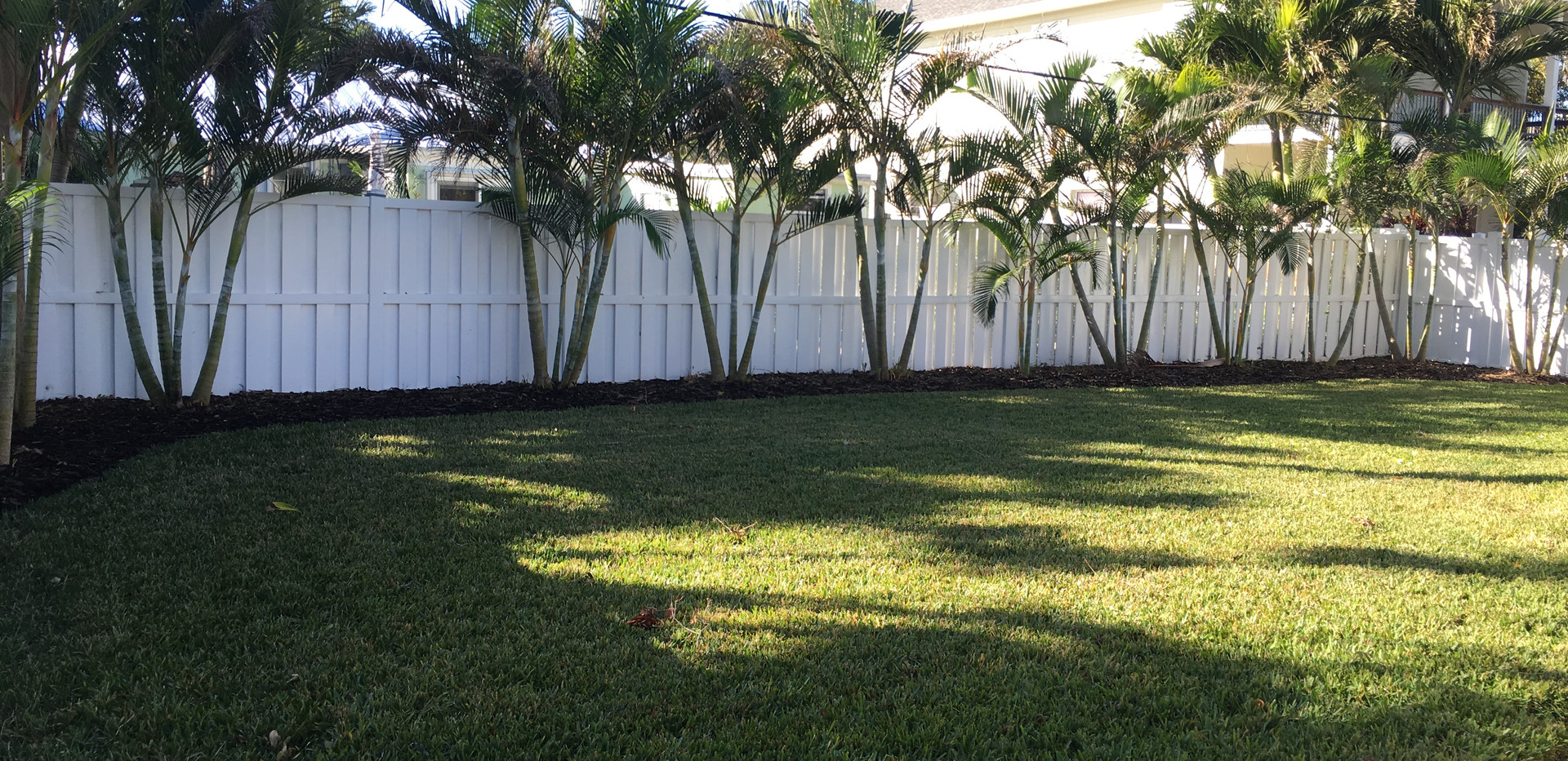 plants grass after.JPG