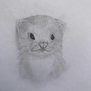 Otter, Abigail Andres (Level 1)