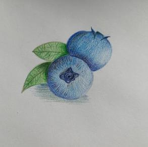 Blueberries, Danica Baxa (Level 2)