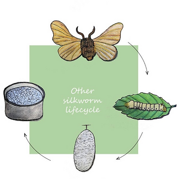 Other silk lifecycle