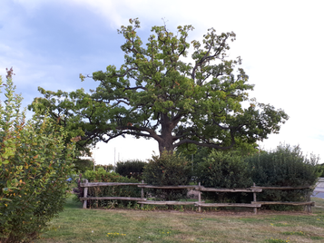 Chapter 3 – The Open Book Café – The Legacy of Trees