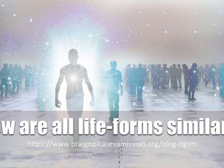 How are all life-forms similar?