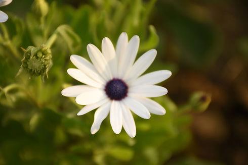 A flower at Braj Gopika Dham, Tangi