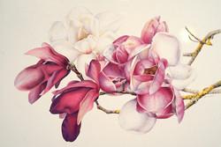 Heidi Willis Brisbane Workshop