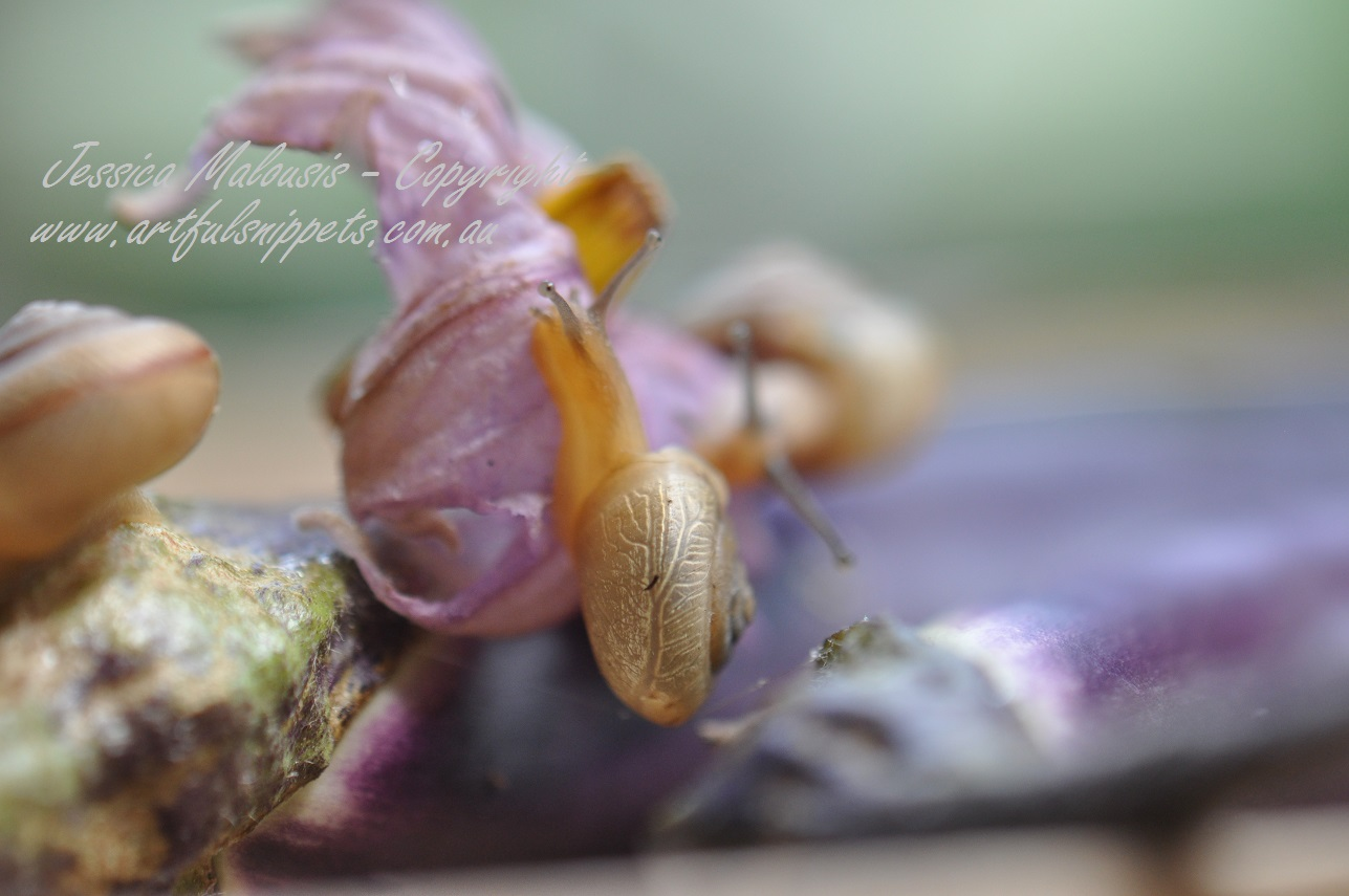 Snail and Eggplant